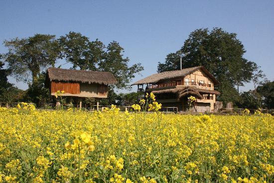 Diphlu River Lodge: mustard