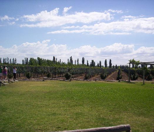 San Rafael, Argentina: viñedos