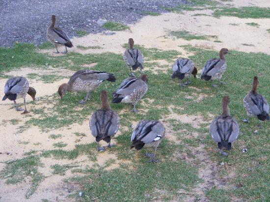 Karrinyup Waters Resort: plenty of birds with the 2 lakes