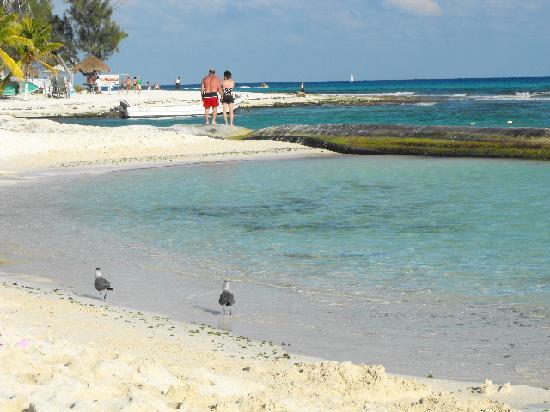 Sandos Caracol Eco Resort The Beach At