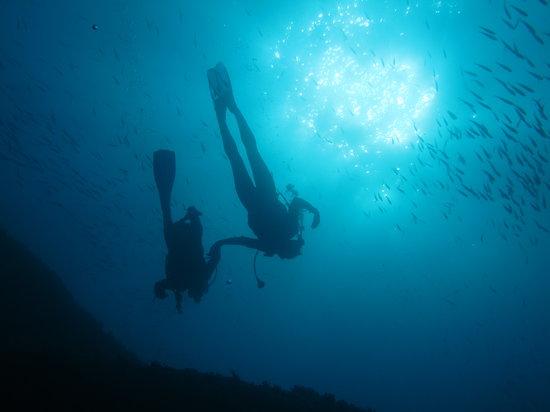 Plongée Phocéenne : Plongée Formation 1