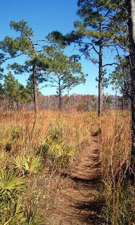 Kissimmee, FL: natural environment