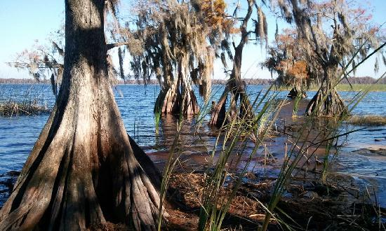 The Disney Wilderness Preserve: Lake Russell