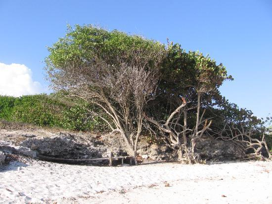 MoonRaker Beach Hotel: beach