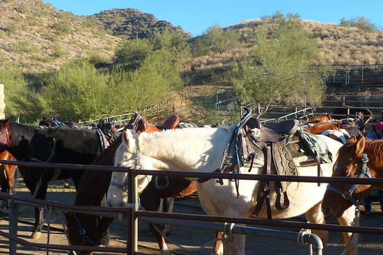 Cave Creek Trail Rides: horses