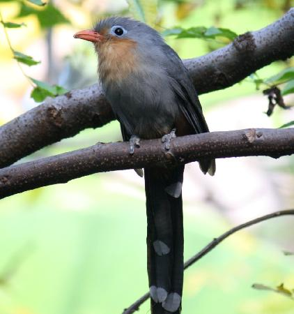 Zoo Miami: I loved this little bird in the Wings of Asia exhbit - Fantastic aviary