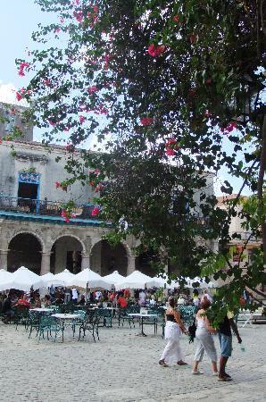 จตุรัสสาธารณะ: The plaza