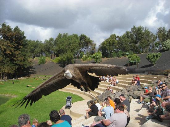 Rancho Texas, Lanzarote - Picture of Rancho Texas Lanzarote Park, Puerto Del ...