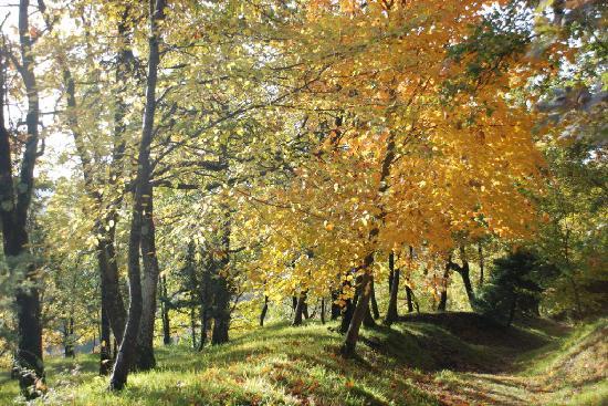 Agriturismo Le Cinciallegre: passeggiata nel parco