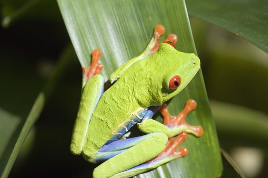 Rainforest Adventures: amazing frog
