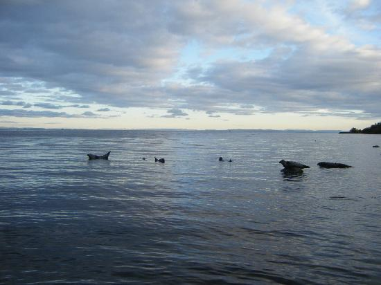 Auchrannie Spa Resort: Seals at Dusk