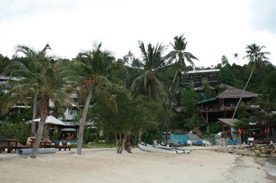 คุ้กกี้สลัด รีสอร์ท: View from the beach 2