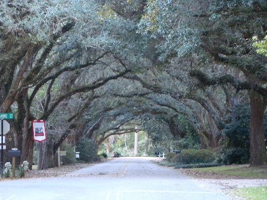 Magnolia Springs Bed & Breakfast: Canopy on Oak Street - right in front of the B&B