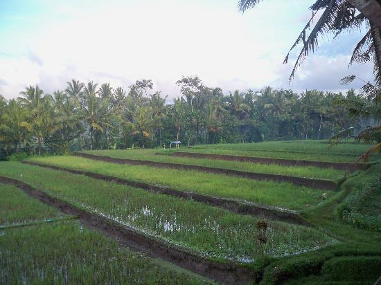 Junjungan Ubud Hotel and Spa: View from the balcony