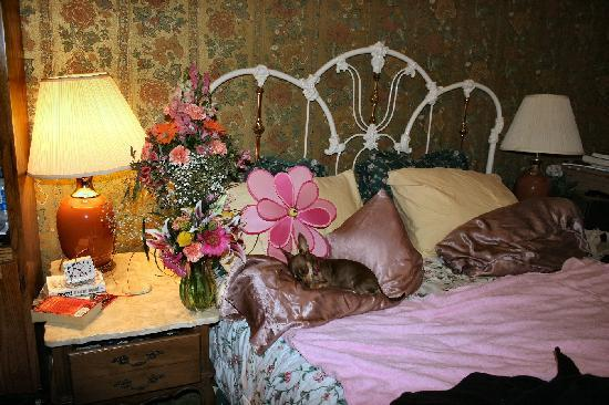 Calumet and Arizona Guest House: Sauci on my pillow in the Gold room