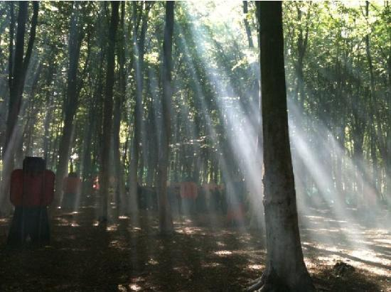Beautiful Forest Setting Picture Of Combat Paintball Ltd