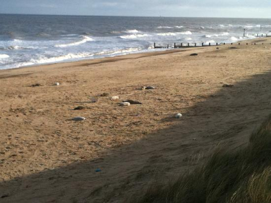 Stable Cottage Luxury Self Catering: Seals at Waxham