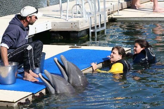 Dolphins Plus - Key Largo: Instructor telling us what trick we'll do next