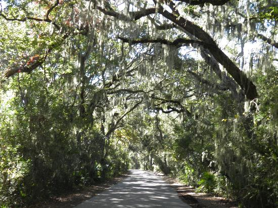 Residence Inn Amelia Island: canopy roads at the fort