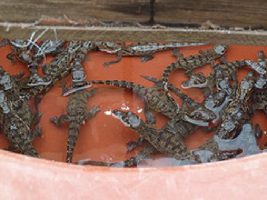Nautla, Mexico: ridley turtles