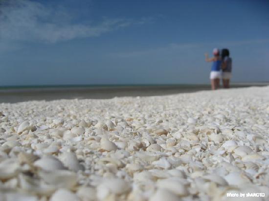 Denham, Australia: シェルビーチ