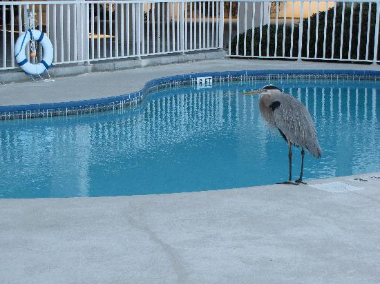 Hamilton House Condominiums: Pool Guest