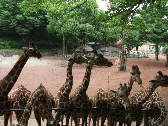 餌の時間 - Picture of Tama Zoological Park, Hino - TripAdvisor