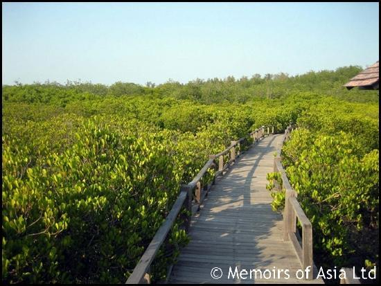 Memoirs of Asia Day Tours: mangrove forest