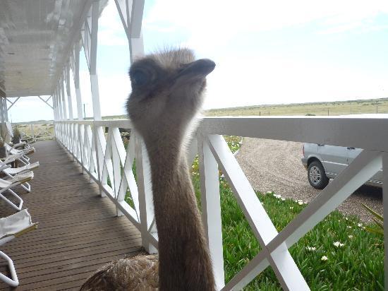 Punta Delgada, Argentinien: home pet