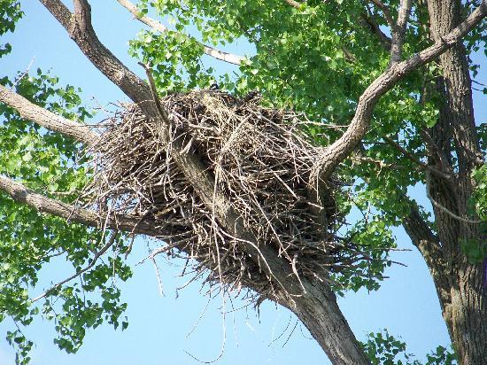 Mississippi Explorer Cruises : Eagle Nest