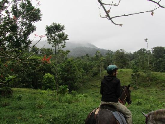 Selva Bananito Lodge: From our horseback ride