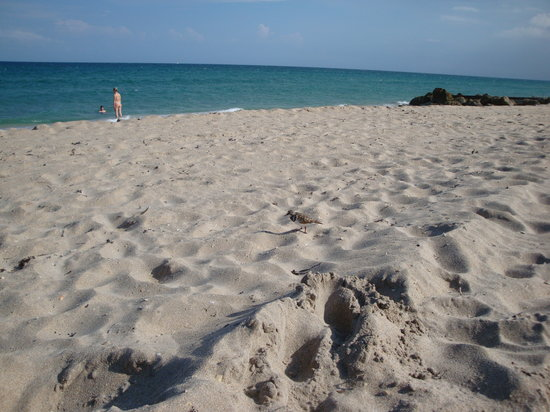 Palm Beach, Floride : Blick n. SO