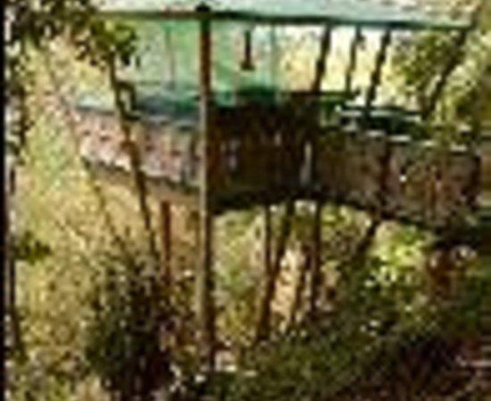 Tropical Treehouse照片