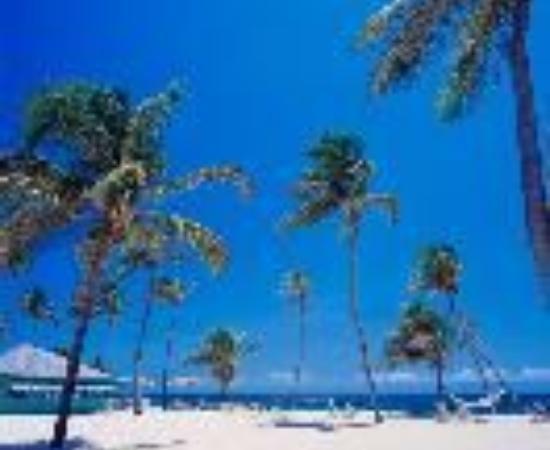 尼斯比特種植園海灘俱樂部照片