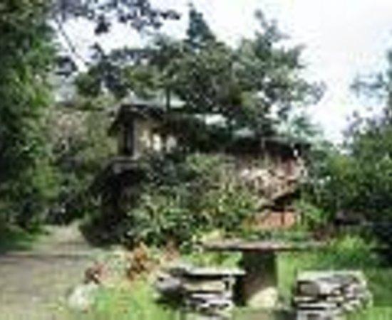 TreeTop House Thumbnail