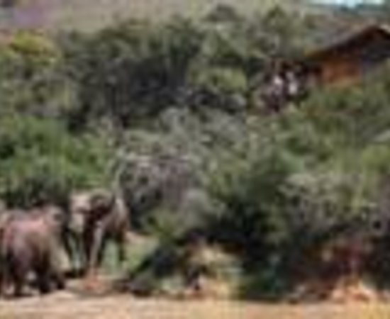 Addo Elephant Back Safaris: Addo Elephant Safari Lodge Thumbnail