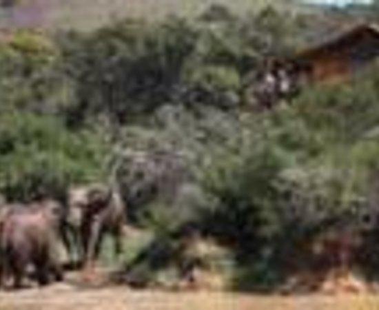 Addo Elephant Back Safaris照片