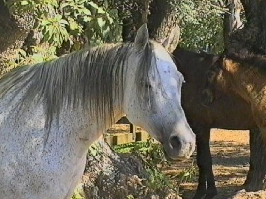 Estancia El Ombu de Areco: nuestros caballos
