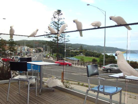 Qdos Arts Treehouses: Dinner in Lorne with some company