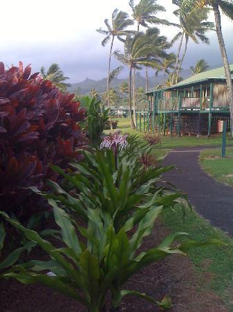 Travaasa Hana, Maui: the grounds of the resort