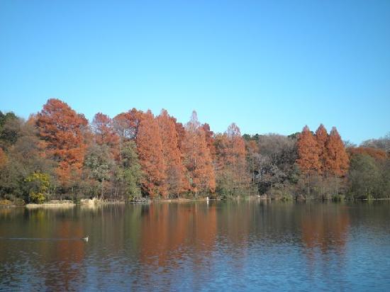 Shakujii Park: 三宝寺池