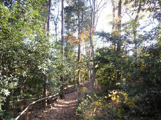 Ochiai River and Minamisawa Springs: 武蔵野の緑がかなり良く保存されています