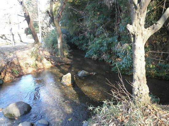 Ochiai River and Minamisawa Springs: 遊水は水量豊かな小川に