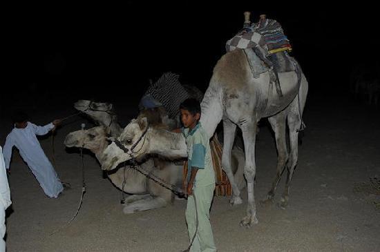 Sharm El Sheikh, Egipto: コメントを入力してください (必須)
