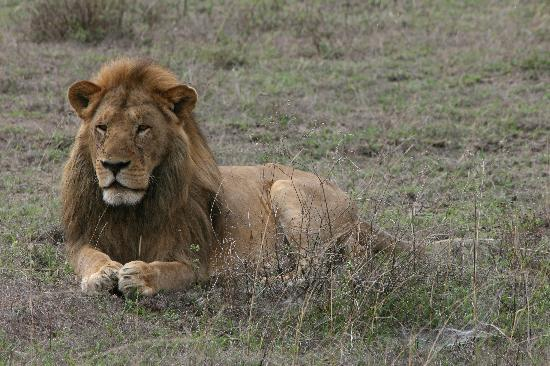 Ndutu Safari Lodge: Local wildlife 1