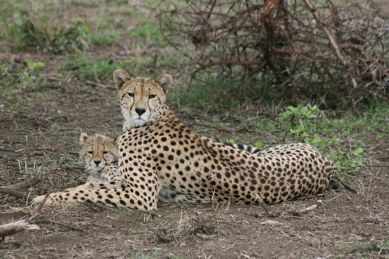Ndutu Safari Lodge: Local wildlife 2