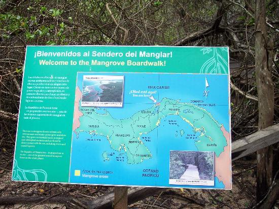 The Galeta Marine Laboratory: Mangrove trail