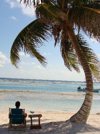 Mahahual, Mexico: Perfect Cococut tree, view and margarita.