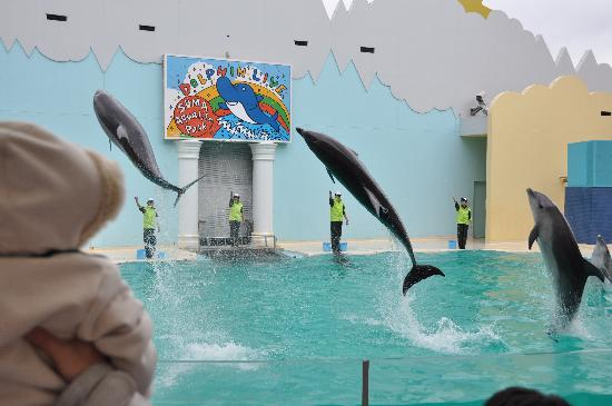 Kobe City Suma Marine Aquarium: 高いジャンプ