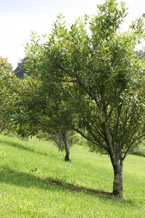 Penny Ridge has a range of fruit and nut trees